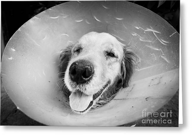 Convalescing Greeting Cards - Agape Dog with funnel Greeting Card by Anon Pichittanabodeekun