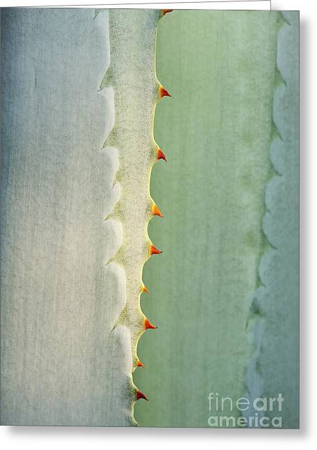 Thorny Greeting Cards - Agave Americana Greeting Card by Tim Gainey