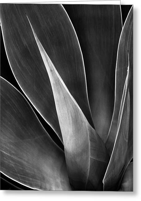 Best Sellers -  - Geometric Digital Art Greeting Cards - Agave No 3 Greeting Card by Ben and Raisa Gertsberg
