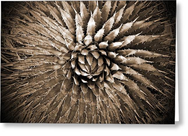 Contemporary Western Fine Art Greeting Cards - Agave Spikes Sepia Greeting Card by Alan Socolik