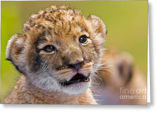 Age Of Innocence Greeting Card by Ashley Vincent