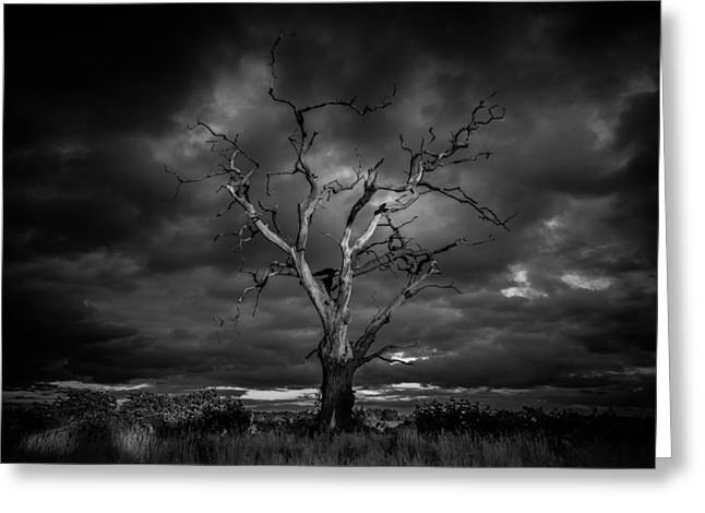 Dead Tree Trunk Greeting Cards - Age old Greeting Card by Chris Fletcher