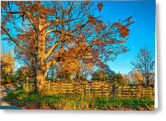 Split Rail Fence Greeting Cards - Aged Beauty 2 Greeting Card by Steve Harrington