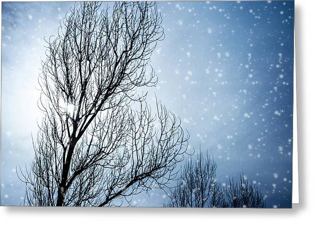 Snowy Night Night Greeting Cards - Aged tree in winter Greeting Card by Anna Omelchenko