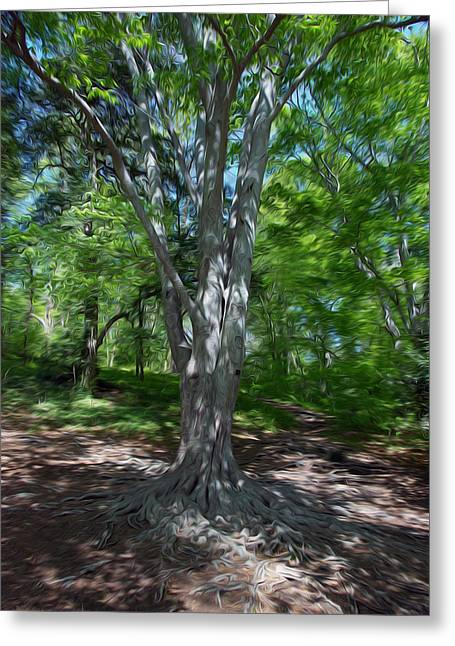 Graceful Tree Greeting Cards - Aging Gracefully Greeting Card by Kelvin Booker