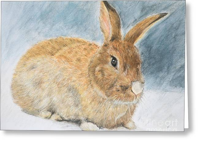 D Pastels Greeting Cards - Agouti Pet Rabbit Greeting Card by Kate Sumners