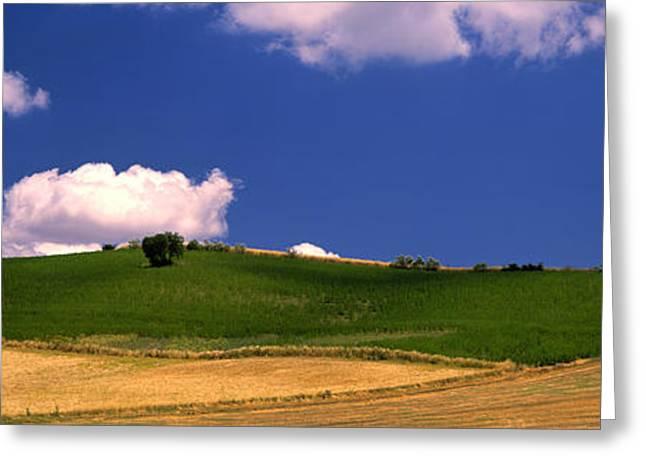 Malaga Greeting Cards - Agricultural Field, Ronda, Malaga Greeting Card by Panoramic Images