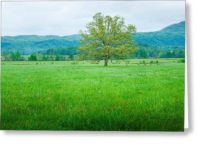 Smoky Greeting Cards - Agricultural Field With Mountains Greeting Card by Panoramic Images