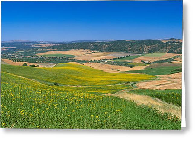Malaga Greeting Cards - Agricultural Fields, Ronda, Malaga Greeting Card by Panoramic Images