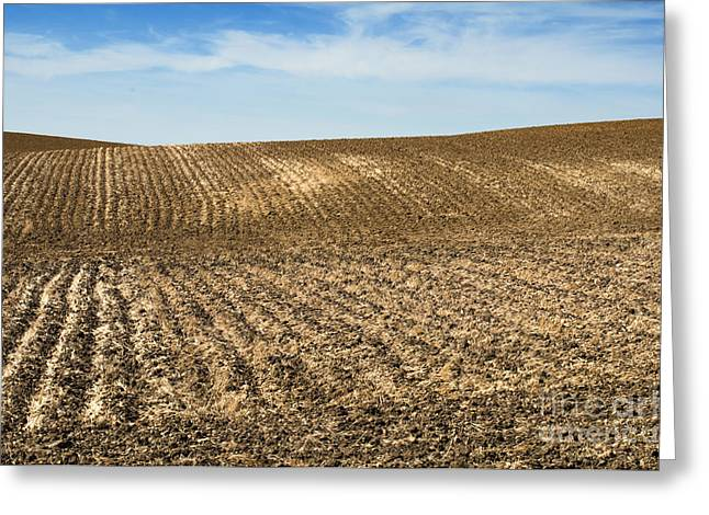 Mud Season Greeting Cards - Agricultural land soil and blue sky Greeting Card by Deyan Georgiev