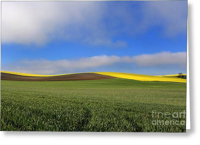 Tranquil Scene Greeting Cards - Agricultural landscape. Auvergne. France. Greeting Card by Bernard Jaubert