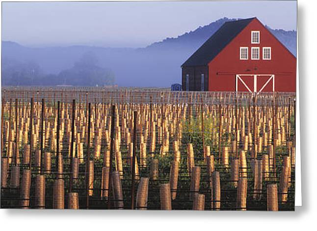 Grape Vineyard Greeting Cards - Agriculture - A New Red Barn Stands Greeting Card by Randy Vaughn-Dotta