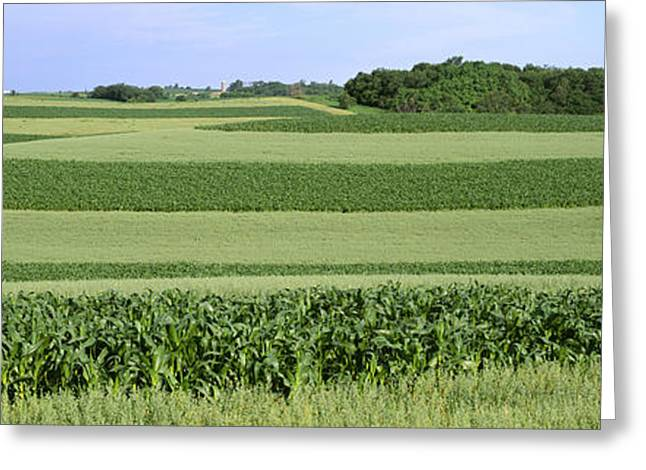 Agriculture - Contour Strips Of Mid Greeting Card by Timothy Hearsum