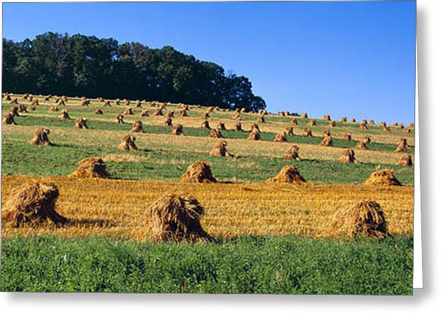 Amish Farms Greeting Cards - Agriculture - Contour Strips Greeting Card by Timothy Hearsum