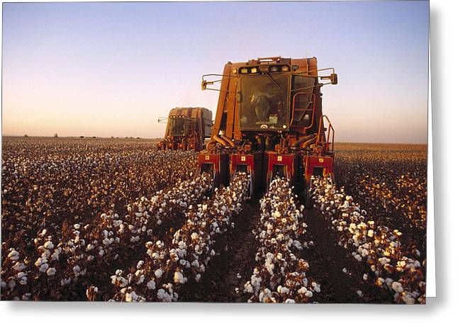 Agriculture - Cotton Harvesting  San Greeting Card by Ed Young