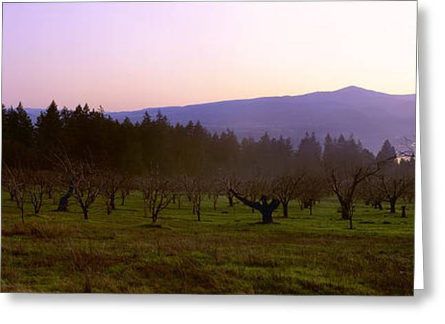 White Salmon River Greeting Cards - Agriculture - Dormant Pear Orchard Greeting Card by Charles Blakeslee