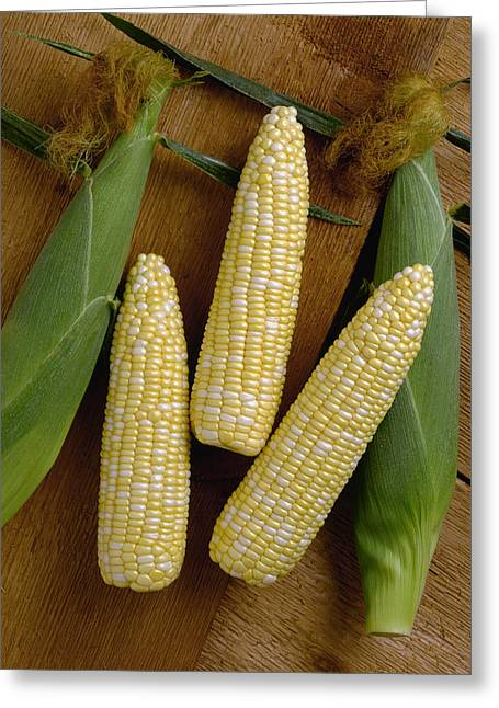 Sweet Corn Farm Greeting Cards - Agriculture - Ears Of Sweet Bi-colored Greeting Card by Ed Young