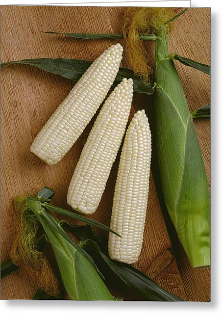 Corn Kernel Greeting Cards - Agriculture - Ears Of Sweet White Corn Greeting Card by Ed Young