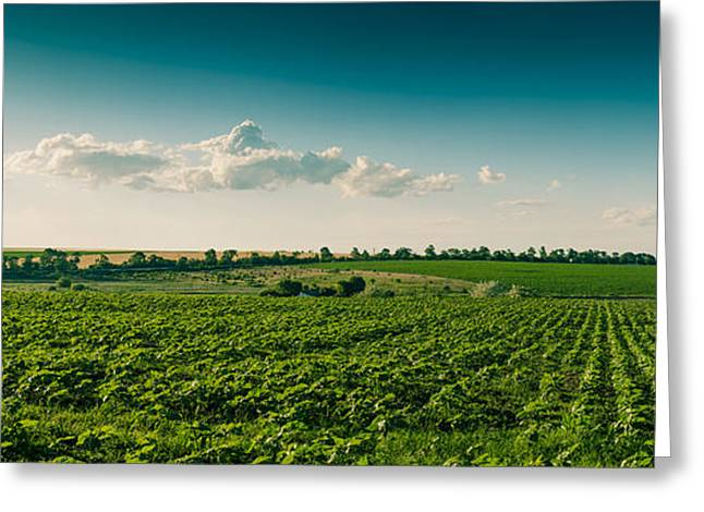 Farmers Field Greeting Cards - Agriculture Field And Perfect Sky Greeting Card by Daniel Barbalata