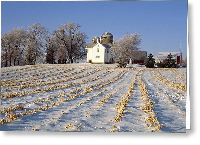Snow Scene Landscape Greeting Cards - Agriculture - Field Of Corn Stubble Greeting Card by Wolfgang Hoffmann