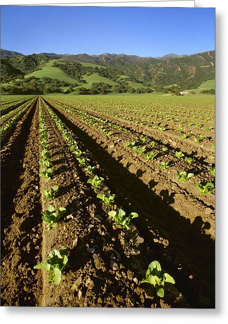 Santa Lucia Mountains Greeting Cards - Agriculture - Field Of Early Growth Greeting Card by Ed Young