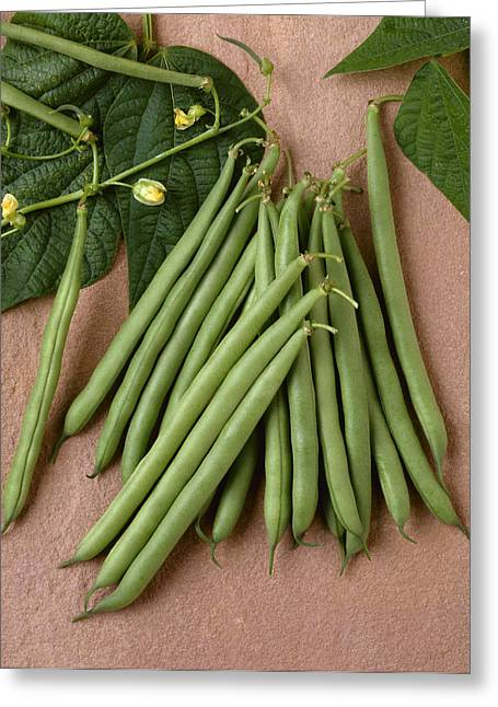 Maturity Greeting Cards - Agriculture - Green Beans On Stone Greeting Card by Ed Young