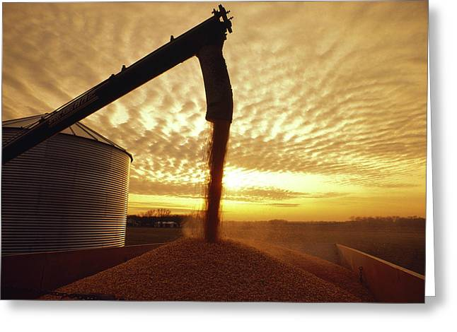 Grain Bin Greeting Cards - Agriculture - Harvested Grain Corn Greeting Card by Alvis Upitis