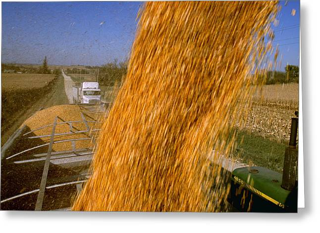 Minnesota Grown Photographs Greeting Cards - Agriculture - Harvested Grain Corn Greeting Card by R. Hamilton Smith