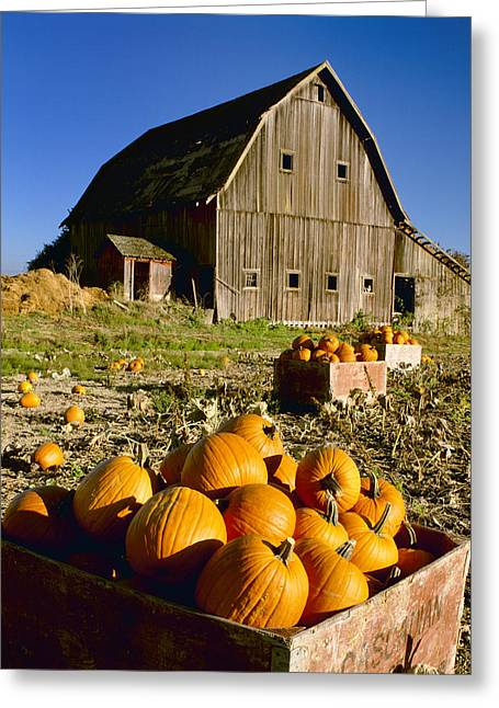 Old Barns Greeting Cards - Agriculture - Harvested Pumpkins In Old Greeting Card by Charles Blakeslee