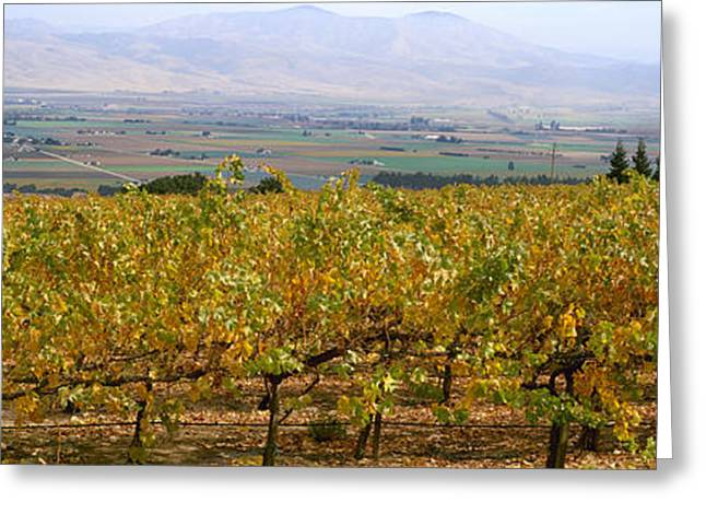 Grape Vineyard Greeting Cards - Agriculture - Hillside Wine Grape Greeting Card by Timothy Hearsum