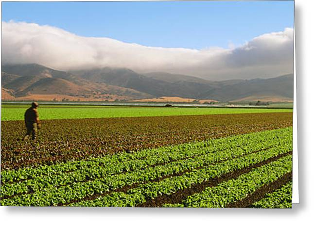 Lettuce Green Greeting Cards - Agriculture - Mature Field Greeting Card by Timothy Hearsum