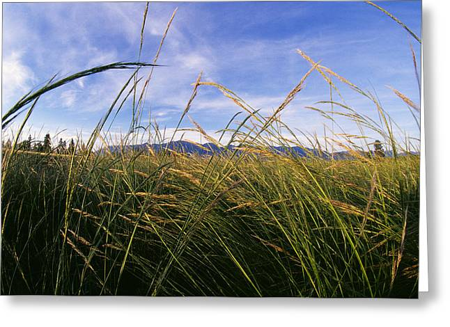Gluten Free Greeting Cards - Agriculture - Mature Stand Greeting Card by Chuck Haney