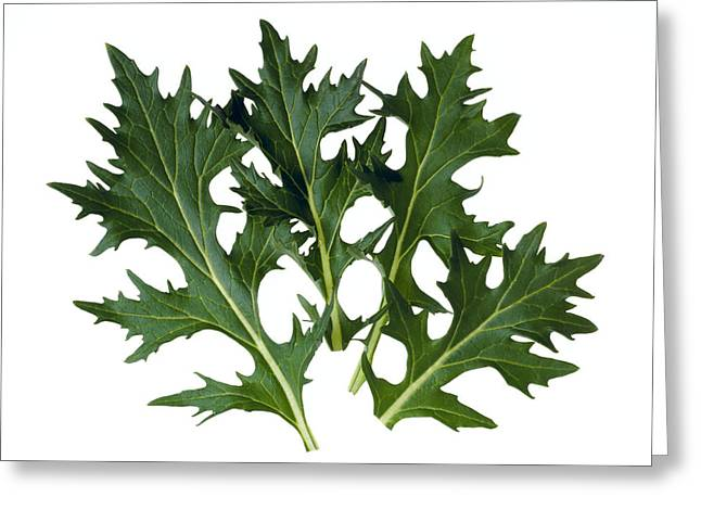 Salad Mix Greeting Cards - Agriculture - Mizuna Leaves Closeup Greeting Card by Ed Young