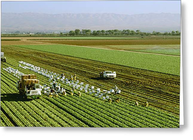 Field Workers Greeting Cards - Agriculture - Overview Of A Field Crew Greeting Card by Timothy Hearsum