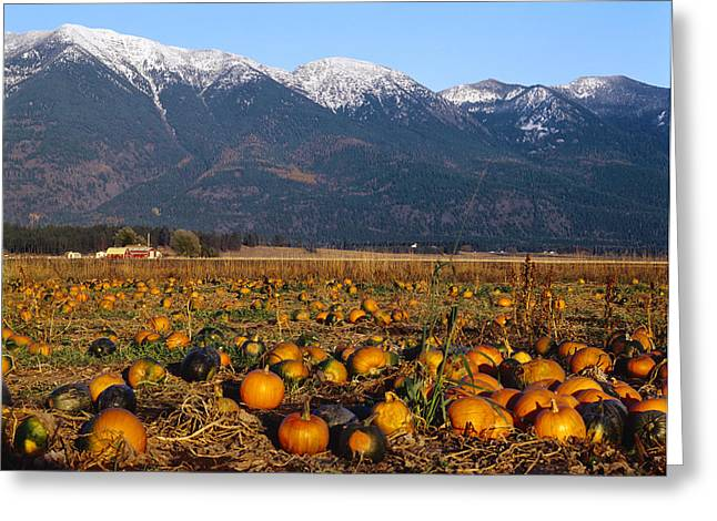 Harvest Time Greeting Cards - Agriculture - Pumpkin Patch In Autumn Greeting Card by Chuck Haney