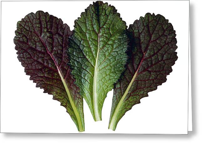 Salad Mix Greeting Cards - Agriculture - Red Mustard Leaves Greeting Card by Ed Young