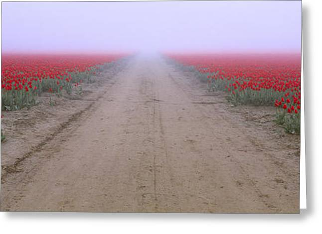 Thick Fog Greeting Cards - Agriculture - Road Through A Commercial Greeting Card by Charles Blakeslee
