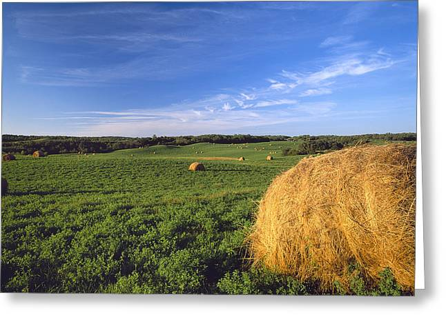 Hay Bales Greeting Cards - Agriculture - Rolling Alfalfa Field Greeting Card by Chuck Haney