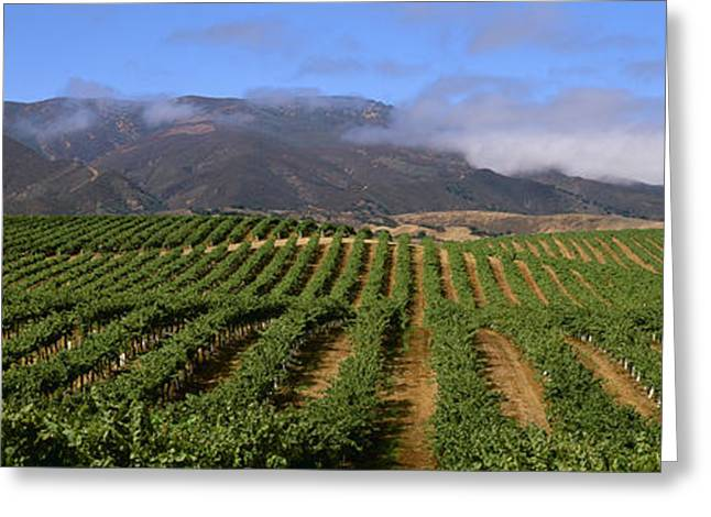 Grape Vineyards Greeting Cards - Agriculture - Wine Grape Vineyard Greeting Card by Timothy Hearsum