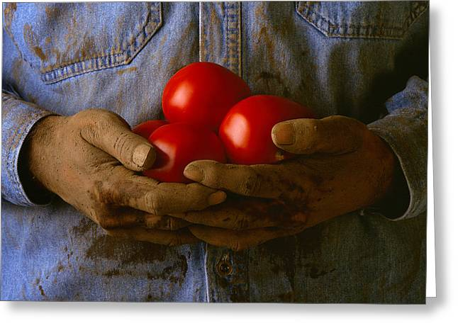 Peterson Greeting Cards - Agriculture - Worker Holding Ripe Greeting Card by Bryan Peterson