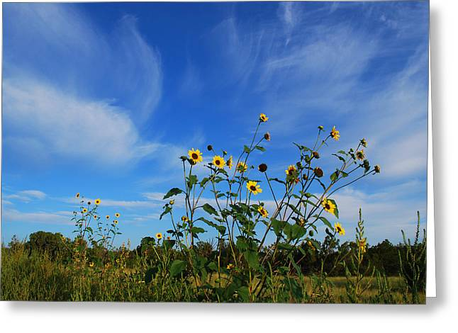Becky Greeting Cards - #flowerscompetingforthesun Greeting Card by Becky Furgason