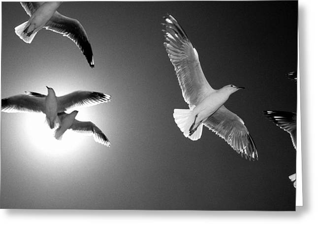 Backlit Prints Greeting Cards - Airborne Greeting Card by Sean Davey