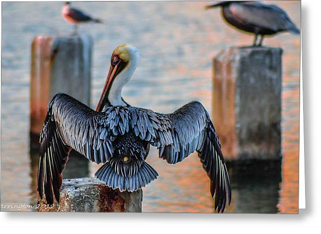 Cedar Key Greeting Cards - Airing Out Greeting Card by Shannon Harrington
