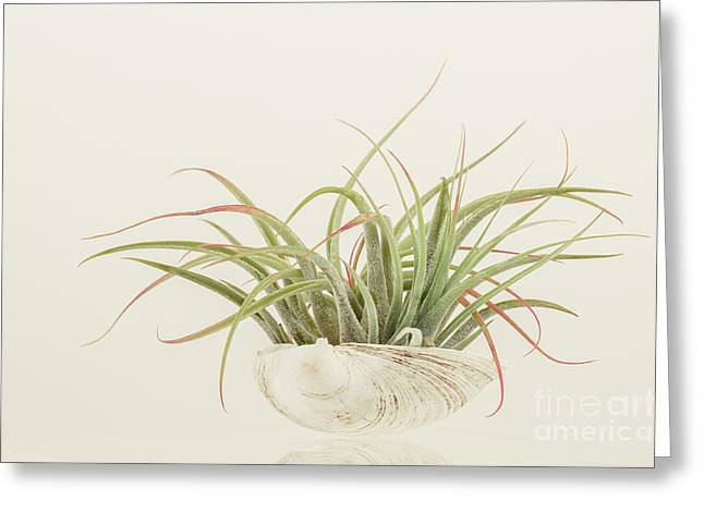Airplant Greeting Card by Lucid Mood