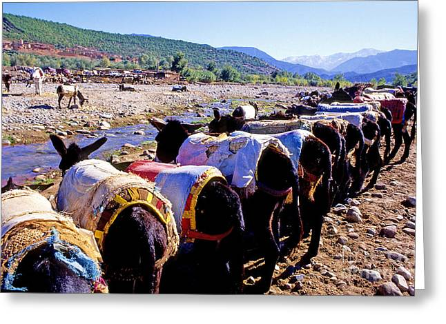 World Destination Greeting Cards - Ait Ourir Tuesday Souk Market, Donkeys Greeting Card by Adam Sylvester