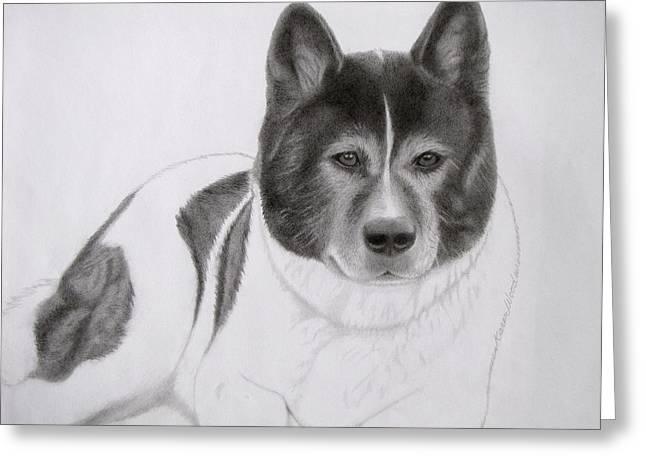 Working Dog Drawings Greeting Cards - Akita Coco Greeting Card by Karen Wood