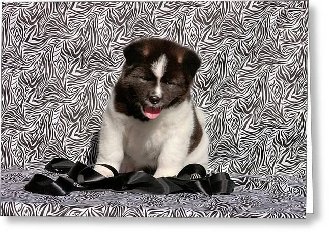 Akita Puppy Sitting In Black And White Greeting Card by Zandria Muench Beraldo