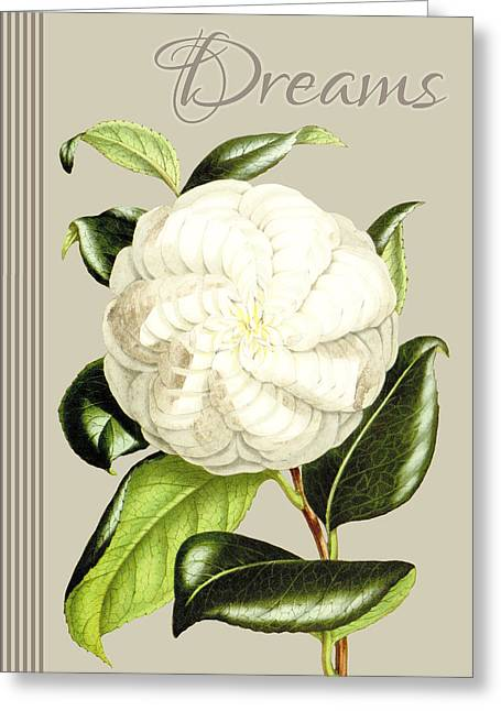 Alabaster Blossom E Vertical Greeting Card by Gail Fraser