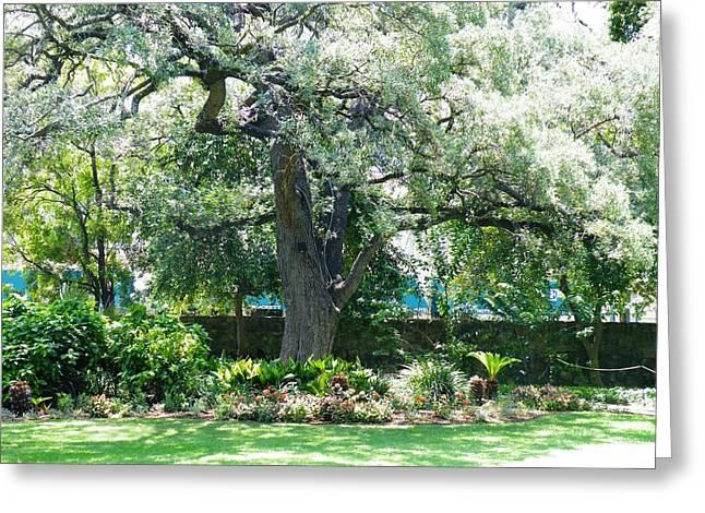 Gypsy Greeting Cards - Alamo Courtyard Acacia Greeting Card by The GYPSY And DEBBIE