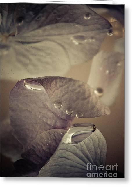 Purple Gladiolas Greeting Cards - Alapaap Greeting Card by Bobby Villapando
